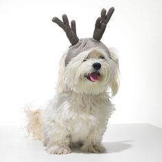 """""""Dog owners love when you love their dogs, so give them this supercute knit hat—complete with cutouts for ears—to keep their four-legged friends toasty and stylish. American Beagle, Heather Brown, White Dogs, Cute Funny Animals, Oprah, Four Legged, Girls Best Friend, Dog Owners, Best Dogs"""
