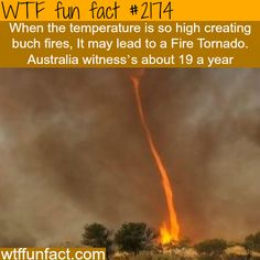Fire tornados in Australia - WTF fun facts. as if the tornado wasn't enough.no lets just add a bit of fire and not only destroy everything but set it on fire. thanks nature. Wtf Fun Facts, True Facts, Funny Facts, Crazy Facts, Random Facts, The More You Know, Good To Know, Did You Know, Just For You