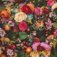 #DSFloral + Best of the Web