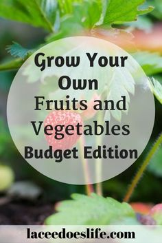 Gardening | Fruits and Vegetables | Budget | Grow | Farm | Crops | Plant | Harvest | Organic | Gardening For Beginners, Gardening Tips, Organic Gardening, Money Saving Tips, Money Tips, Organic Plants, Save Money On Groceries, Reuse Recycle, Fruits And Vegetables