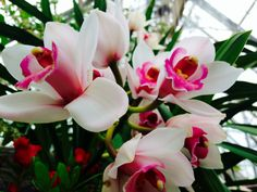Aren't the orchids beautiful?