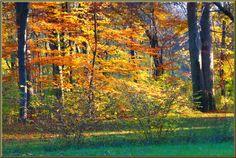 'Herbstwald 27' von Rudolf Büttner bei artflakes.com als Poster oder Kunstdruck $18.02