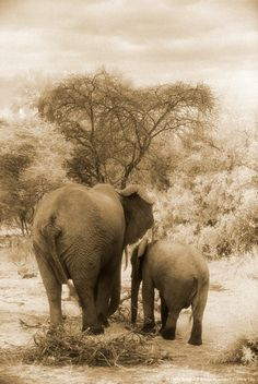 Elephants , Lake Manyara , Tanzania , Africa 9 more months and we will be here =)