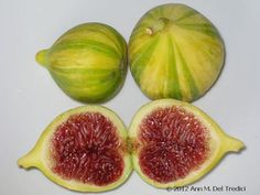 Figs! Panache variety of fig~gorgeous green stripes and raspberry-red interior, Not too sweet~but definitely a sweet fig. Destined for a little Laura Chenel's goat chevre! These figs are from The Peach Farm. Photo © 2012 Ann M. Del Tredici, MS, RD, CDE