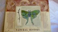 The Naturalist's Notebook Collection - YouTube