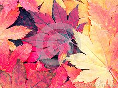 Bright red autumn leaves background