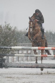 Equestrian. Jumping in the snow. We never take a break