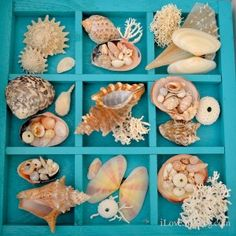 seashell display with coral and urchins on turquoise