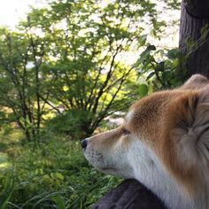 おはようございまーす♪☀️ Good morning!👍 火曜日、朝のおさんぽたいむing🐾 今朝は気温が下がり、薄着だと寒く感じることでしょう。 あれ、愛犬もみじは寝てる?😴 早朝からみんなをお越し周り、俺の方が眠いのに👀 明日からゴールデンウイーク、ゆっくり休ませてくれよな💤 さぁ、すでにお休みの人もそうではない人も、今日1日元気に笑顔で頑張って生きましょうね!💪 Have a nice day!💕🤗 日本の反対側のみなさんは、 Have a nice dream.💕😴 #愛犬#ちばわん#保護犬#dog#mixdog#inu#犬#イヌ#いぬ#ペット#pet#ふわふわ#後頭部#後ろ姿#風景#空#sora#sky#イマソラ#お散歩#おさんぽ#散歩#武蔵五日市#Photo#あきる野市#写真