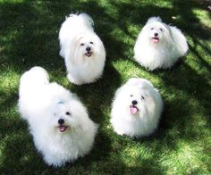 Adorable little fluffies.