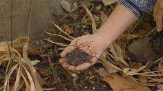 Gardening Australia - Fact Sheet: Gardening Around Palms