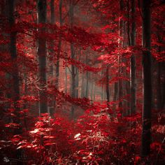 Fire without flame by ildiko-neer.deviantart.com