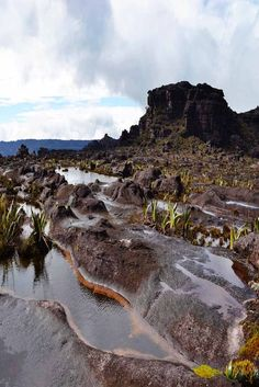 Embark on a 6 day trek to the top of Mount Roraima for a life-changing experience and unforgettable views. Cross rivers, walk through jungles, and see the wildlife up close.