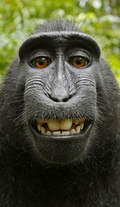 Monkey self portrait. So ugly, but at the same time too cute for words.