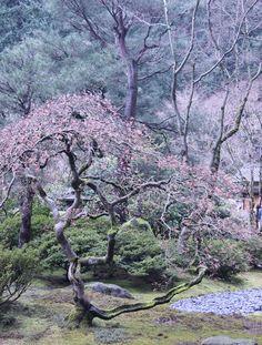 Flowering Japanese Trees