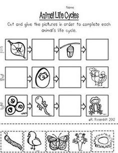 """FREE"" Animal Cut & Paste Activities - Rachelle Rosenblit - TeachersPayTeachers.com"