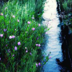 水路に咲いていた花名前は分からない weeds #flower #paddyfield #weed #eos70d #水路 #花 #朝の風景