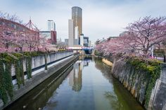 https://flic.kr/p/R2ESVK | Sakura season over Meguro River in Nakameguro, Tokyo | Nakameguro is a quiet residential district of Meguro, Tokyo. The district is situated along Yamate Dōri Ave and on the southern region of Komazawa Dōri Ave. Since Nakameguro Station is located not in this district but in northern Kamimeguro, the place name Nakameguro is often used for the larger region encompassing Nakameguro and Kamimeguro as well as a small portion of Aobadai and Higashiyama.  Personal site…