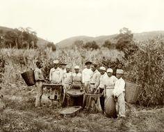 Escravos numa plantação de café - Marc Ferrez, c. 1882//Domínio público    In :: Identidade 85: Ainda 13 de maio - fim da escravidão: imagens de outras épocas