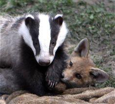 unlikely animal friends   Meet some 'Unlikely Animal Friends'