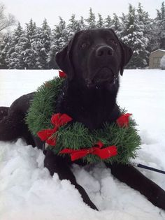 Yellow Lab With Wreath Christmas Card, from Dogstuff.com. A great ...
