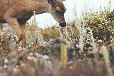 Deer//Creatures