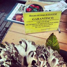 Mercato dei #funghi di #Giaveno #aboutvalsangone