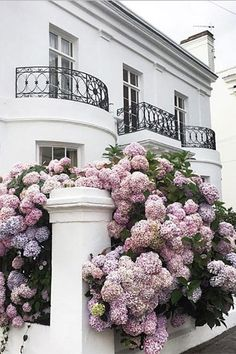 Overgrown Hydrangeas - 17 Dreamy Hydrangea Gardens That Have Us So Ready for Spring - Southernliving. Let them grow! We love the look of overgrown hydrangeas.  See Pin