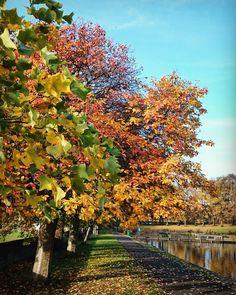 """autumn colours "" #autumn #colours #inverleithpark #stockbridge"