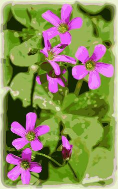 Shamrock flowers, purple flowers, floral, wildflower, Shamrock flower print, Shamrock flower art, Shamrock flower greeting cards, Shamrocks, Art, Purple flower print, Purple flower art, Floral art, Flower wall art, Flower photography, Flower art, Flower framed print, Flower canvas print, flower acrylic print, flower metal print, flower greeting cards, flower poster, Shamrock flower metal print, Shamrock flower canvas print, Shamrock flower acrylic print, Floral acrylic print, Floral metal…