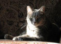 My cat Emma. Laura, Maple Grove, MN. 10/22/12.