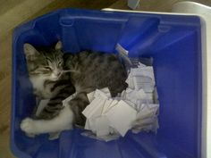 he gets tired waiting for the recycling
