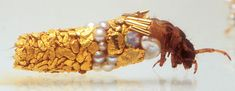 Hubert Duprat's aquatic caddis fly larvae, with cases incorporating gold, opal, and turquoise, among other materials.