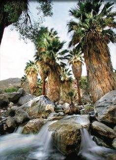 Indian Canyon, Palm Springs