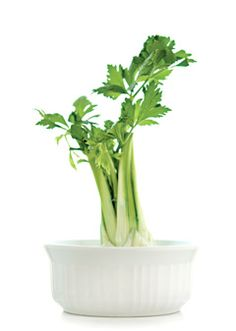 Grow Celery:  Go to Wondertime and search Celery, click on the Baby Trees link and you will find a thumbnail with a link to this project titled Green Day.
