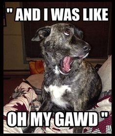 Tierischer humor, funny dog humor, funny dog faces, funny dog with captions, Funny Animal Photos, Funny Animal Jokes, Funny Dog Memes, Funny Cats And Dogs, Really Funny Memes, Cute Funny Animals, Funny Animal Pictures, Cute Baby Animals, Funny Cute