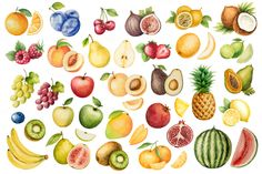 Watercolor fruit collection. - Graphics - 2