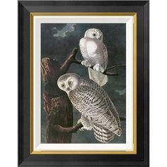 Global Gallery 'Snowy Owl' by John James Audubon Framed Graphic Art Size: