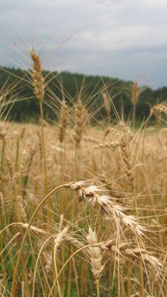 Bio-Weizen Vineyard, Outdoor, Culture, Outdoors, Outdoor Games