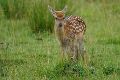Gratis bild på Pixabay - Kitz, Unga Djur, Kronhjort, Zoo