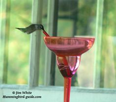 Information about Hummingbird Migration. Here is an interactive Migration Map 2013 and a list of sightings submitted by our visitors for 2013. Submit your hummingbird sightings.