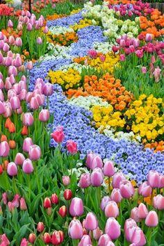 Colour spectacle!!!!!