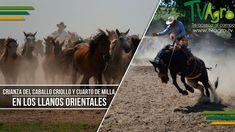Crianza del Caballo Criollo y Cuarto de Milla en los Llanos Orientales-T...