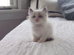 Kitten bed style