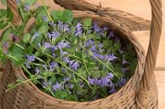 You searched for Tonik z kurdybanku Home Remedies, Natural Remedies, Healthy Life, Healthy Living, Edible Flowers, Geraniums, Superfood, Country Living, Food Hacks