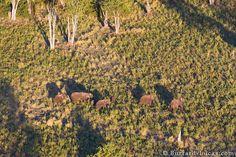 Elephants from a Microlight - Burrard-Lucas Photography