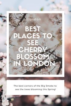 Spring in London is magical and here are the best places to see the flowers blooming. Best Places In London, Uk Capital, London Life, Activities To Do, Spring Flowers, Cherry Blossom, Adventure Travel, Places To See, Claire