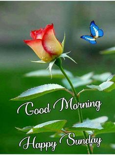 Sunday Good Morning Wishes – Here is Latest Sunday Good Morning Images , Free Good Morning Wallpaper In HD Happy Sunday Images, Good Morning Sunday Images, Good Morning Image Quotes, Happy Sunday Quotes, Good Morning Inspiration, Sunday Morning Quotes, Good Morning Picture, Good Morning Love, Good Morning Flowers