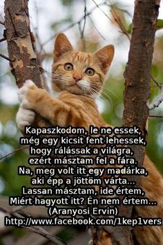 Kapaszkodom, le ne essek My Sister, Smiley, Funny Jokes, Literature, Poems, Cute Animals, Album, Thoughts, Quotes