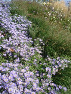 Gezien in De Nationale Vaste Plantentuin in De Tuinen van Appeltern